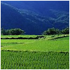 A series of rice fields in the mountains.